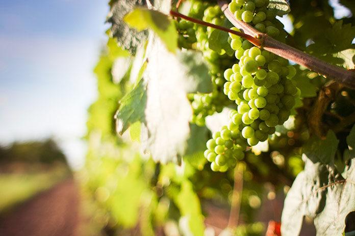 Polscy importerzy wina