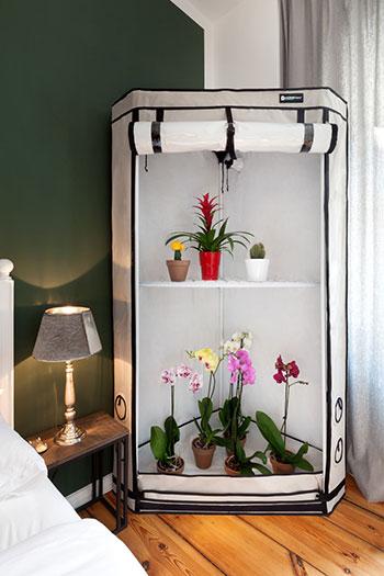 Jakie orchidarium wybrać do domu?